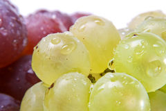 Fresh red and white grapes Royalty Free Stock Photos