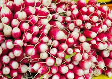 Fresh red and white radishes Royalty Free Stock Photos