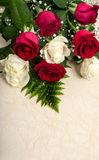 Fresh red and white roses Stock Images