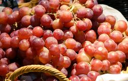 Fresh red wine grapes on market royalty free stock image