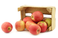 Fresh red and yellow apples Royalty Free Stock Photo