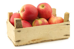 Fresh red and yellow apples Stock Photography