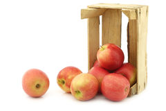 Fresh red and yellow apples Stock Photos