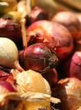 Fresh red and yellow bulb onions Royalty Free Stock Photos