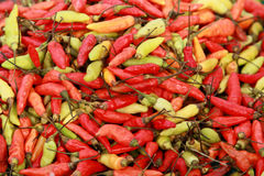 Fresh Red And Yellow-green Chili Peppers Royalty Free Stock Photos