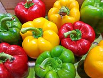 Fresh Red Yellow and Green sweet pepper on the street market. Colorful bell peppers. Colorful sweet paprika Stock Photos