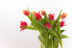 Fresh red and yellow tulips in bouquet. Fresh red and bright yellow tulips in bouquet Royalty Free Stock Photos