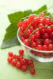 Fresh redcurrant Royalty Free Stock Photo