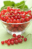 Fresh redcurrant Stock Images