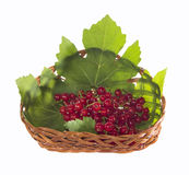 Fresh redcurrant in a basket Stock Images