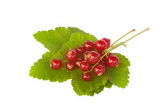 Fresh redcurrant berries, isolated Stock Images