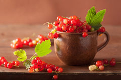 Fresh redcurrant in cup over rustic wooden background Royalty Free Stock Images