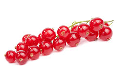 Fresh redcurrant isolated Stock Photos