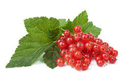 Fresh redcurrant isolated Royalty Free Stock Photography
