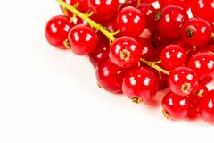 Fresh redcurrant isolated on white background. Some fresh redcurrant isolated on white background with copyspace royalty free stock photo