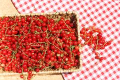 Fresh redcurrant or red currant (Ribes rubrum) Stock Photos