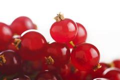 Fresh redcurrant Stock Image