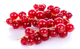 Fresh redcurrants Royalty Free Stock Photography