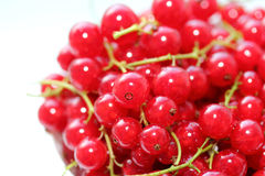 Fresh Redcurrants Stock Images