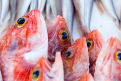Fresh redfishes and other seafood on market in Morocco ready for Royalty Free Stock Photo