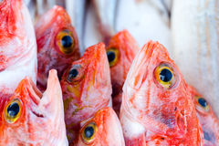 Fresh redfishes and other seafood on market in Morocco ready for Stock Photo