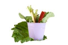 Fresh Rhubarb Royalty Free Stock Images