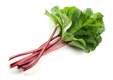 Fresh Rhubarb Isolated Stock Photos
