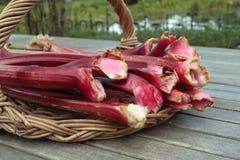 Fresh rhubarb shoots  closeup on willow basket Stock Image