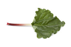 Fresh Rhubarb stalk and leaf. On white background Stock Photography