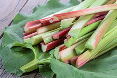 Fresh rhubarb Stock Image