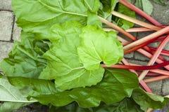 Fresh rhubarb stems Stock Photo