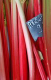Fresh rhubarb stems Stock Images