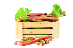 Fresh rhubarb in wooden crate. Fresh picked rhubarb in wooden crate on white background Stock Image