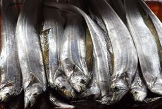 Fresh Ribbonfish for Sale in Taiwan Royalty Free Stock Photo