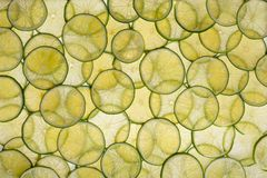 Fresh ring lime. Lime green rings arranged in a row Royalty Free Stock Images