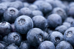 Fresh Rinsed Blueberries Royalty Free Stock Image