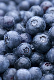 Fresh Rinsed Blueberries Royalty Free Stock Photo