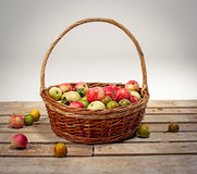 Fresh ripe apples in basket Stock Images