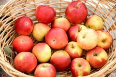 Fresh ripe apples in basket Royalty Free Stock Image