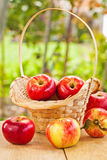 Fresh ripe apples in basket and table in garden Stock Photos