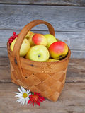 Fresh ripe apples in a basket. Stock Photos