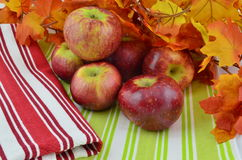 Fresh Ripe Apples on Display Stock Images