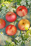 Fresh ripe apples on the old rustic table Stock Photography