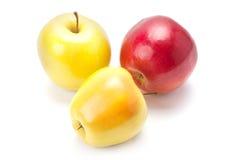 Fresh, ripe apples. Royalty Free Stock Image
