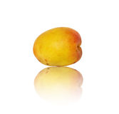 Fresh and ripe apricot Stock Image