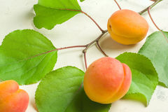 A fresh and ripe apricot and branch with green leaves on a white stone background. Royalty Free Stock Images