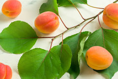 A fresh and ripe apricot and branch with green leaves on a white stone background. Royalty Free Stock Image