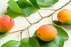 A fresh and ripe apricot and branch with green leaves on a white stone background. Stock Photography
