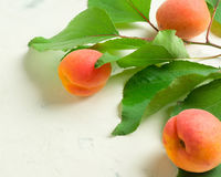 A fresh and ripe apricot and branch with green leaves on a white stone background. Royalty Free Stock Photography
