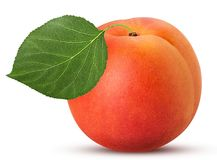 Fresh ripe apricot with leaf. Isolated on white background. Clipping Path. Full depth of field Royalty Free Stock Photo